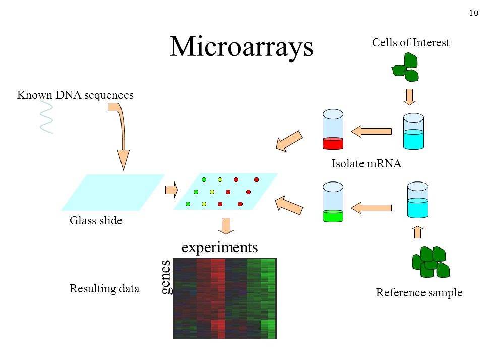 Microarrays experiments genes Cells of Interest Known DNA sequences