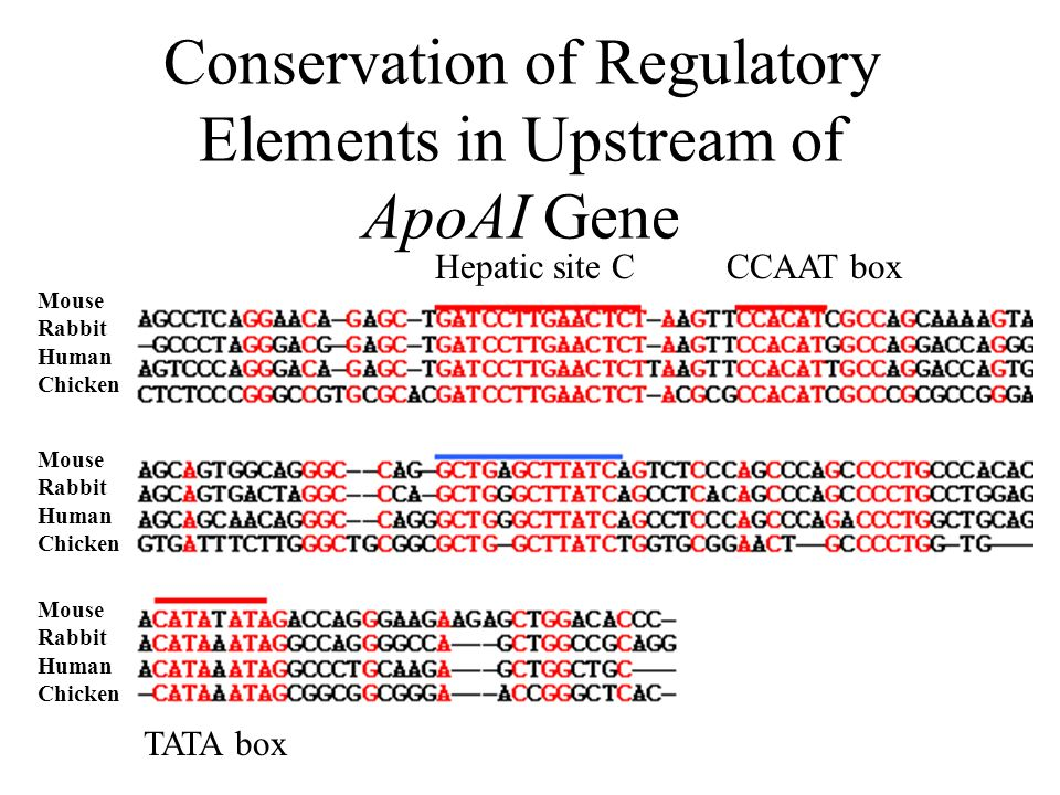 Conservation of Regulatory Elements in Upstream of ApoAI Gene