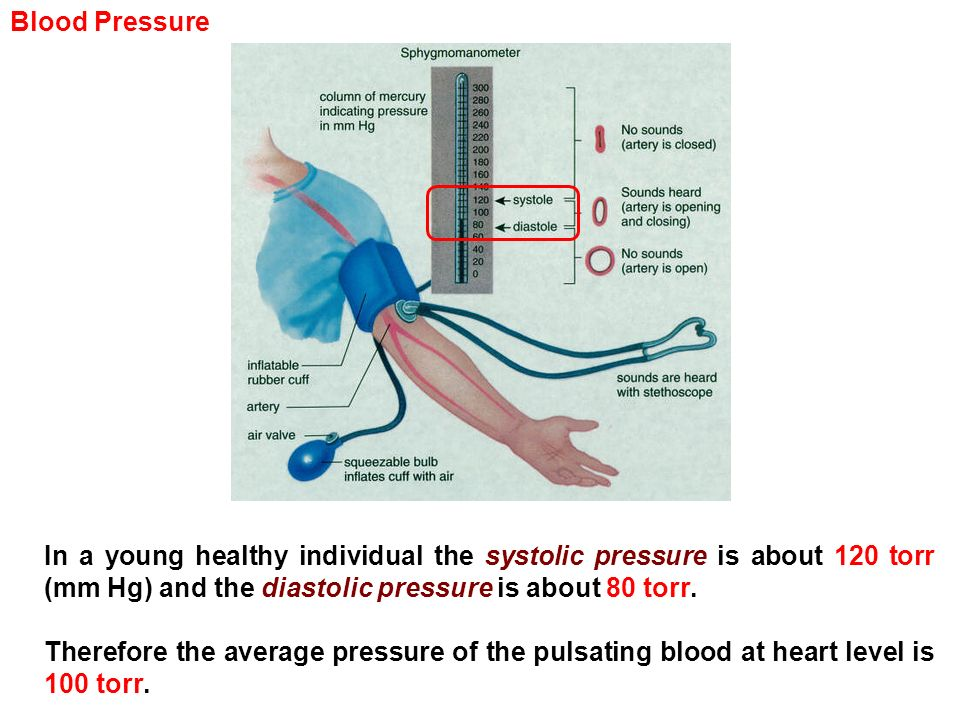 Blood Pressure In a young healthy individual the systolic pressure is about 120 torr (mm Hg) and the diastolic pressure is about 80 torr.