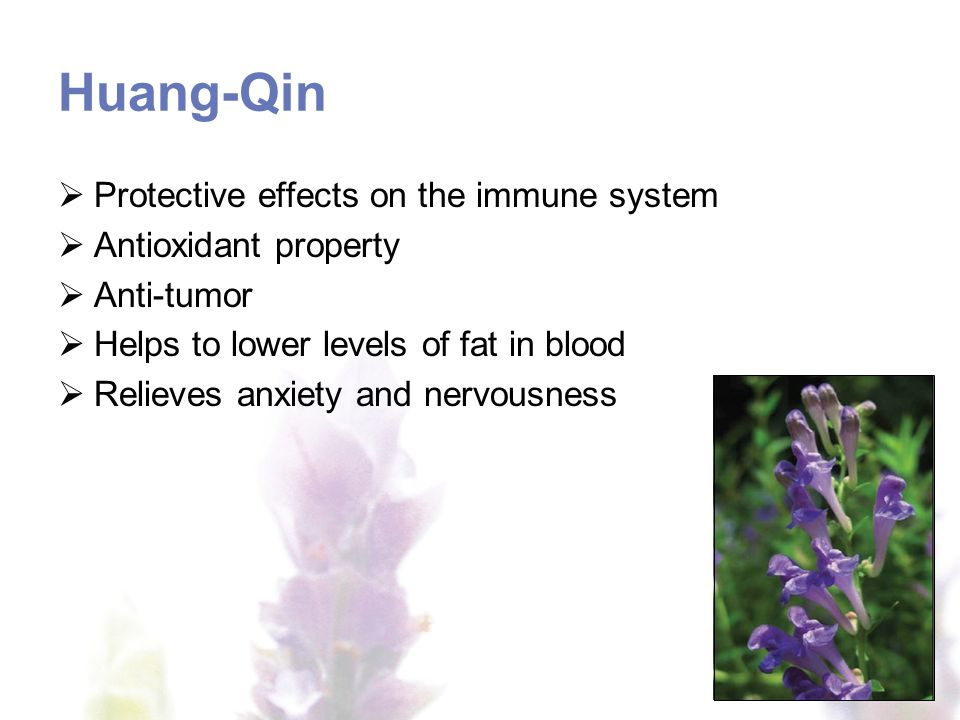 Huang-Qin Protective effects on the immune system Antioxidant property