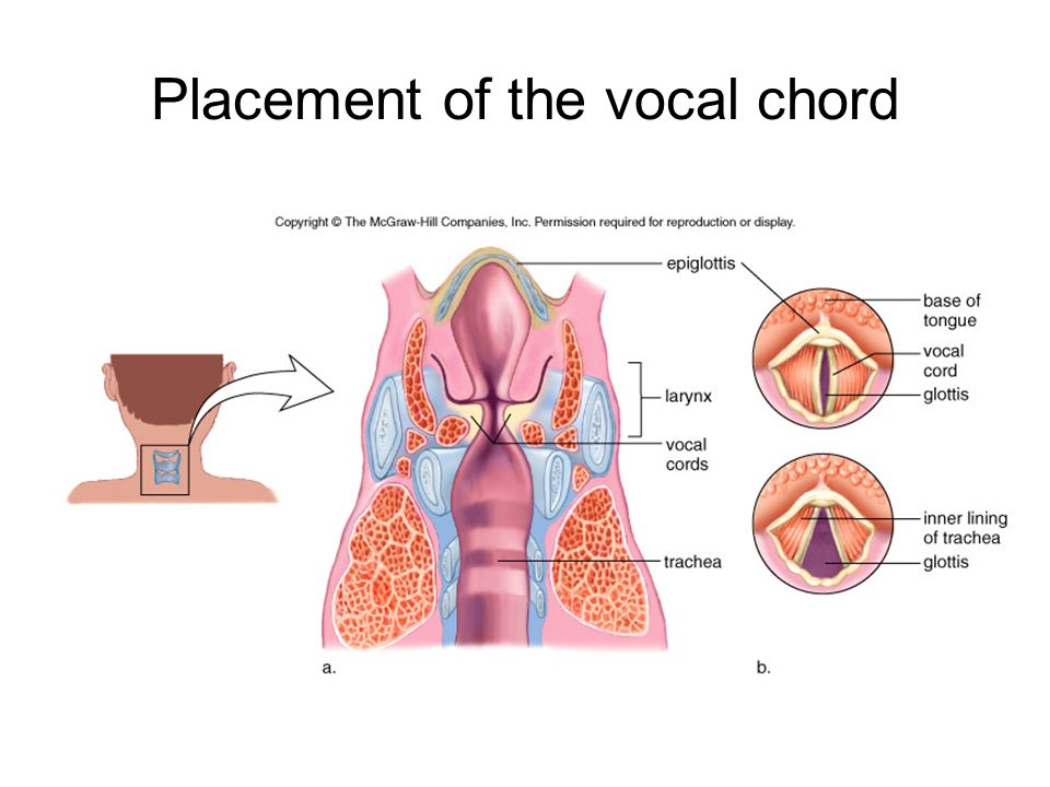 Placement of the vocal chord