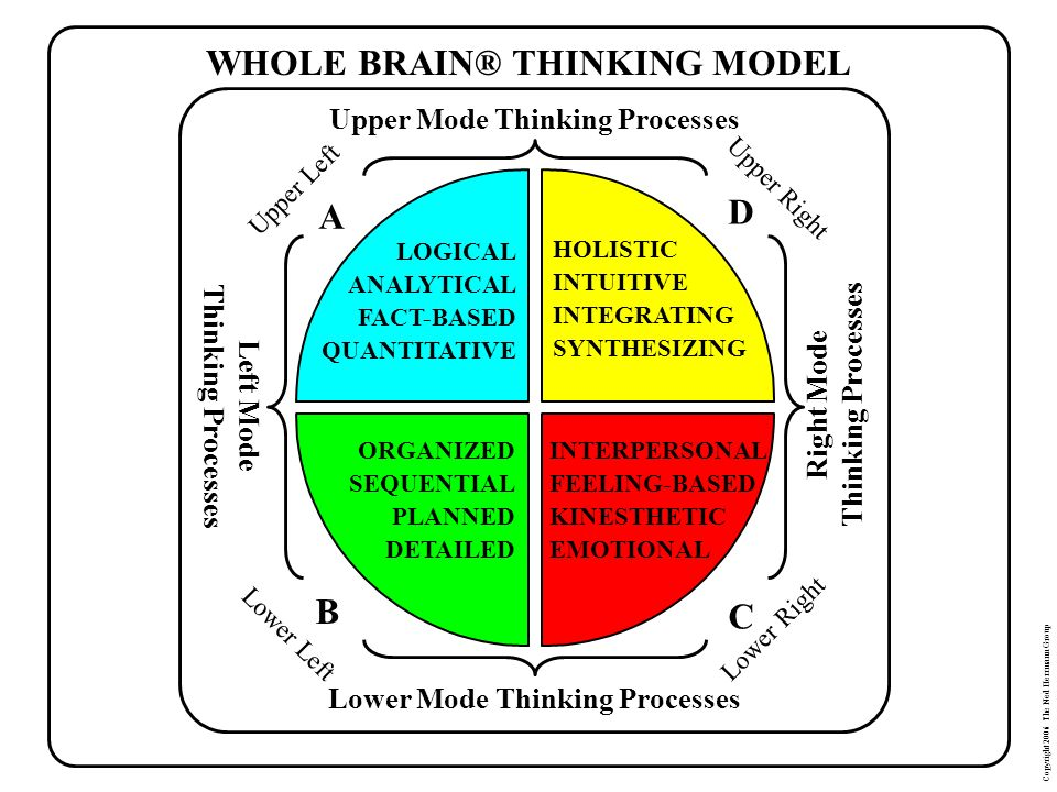 WHOLE BRAIN® THINKING MODEL A D B C