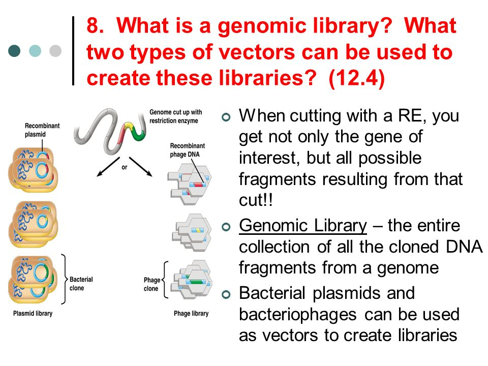 8. What is a genomic library