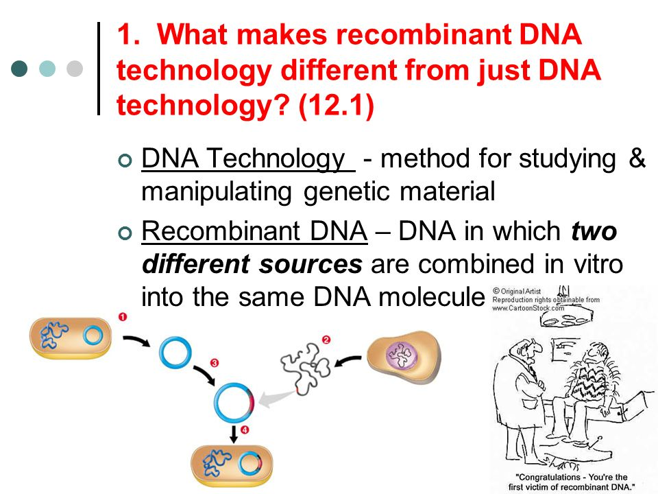 1. What makes recombinant DNA technology different from just DNA technology (12.1)