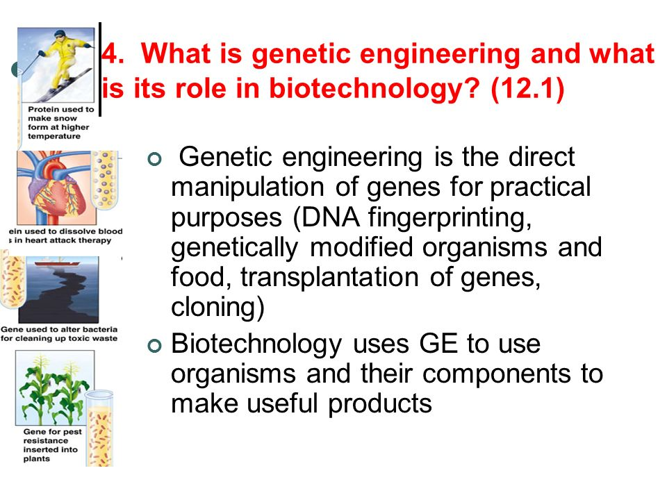 4. What is genetic engineering and what is its role in biotechnology