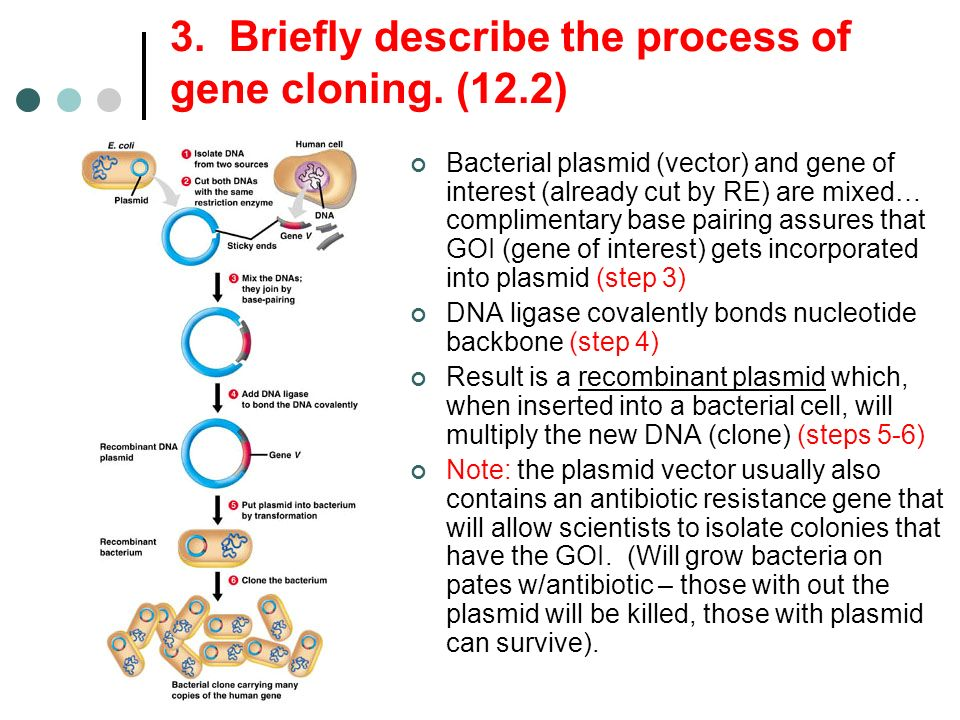 3. Briefly describe the process of gene cloning. (12.2)