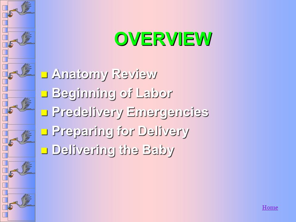 OVERVIEW Anatomy Review Beginning of Labor Predelivery Emergencies