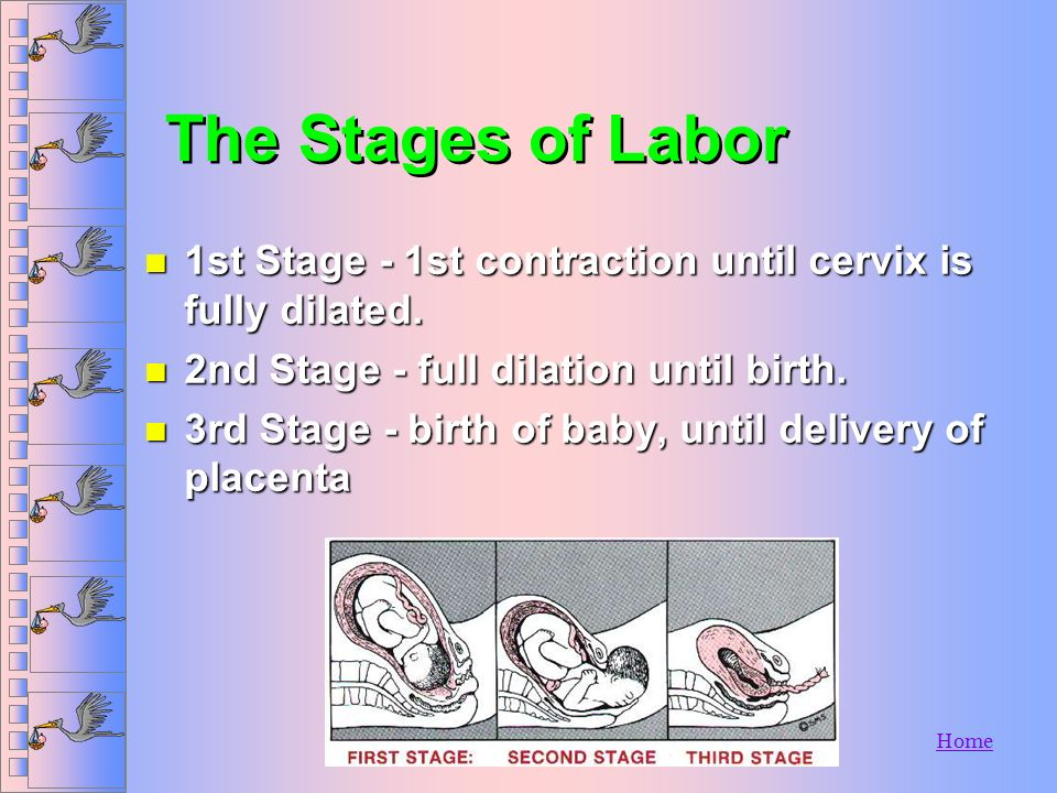 The Stages of Labor 1st Stage - 1st contraction until cervix is fully dilated. 2nd Stage - full dilation until birth.