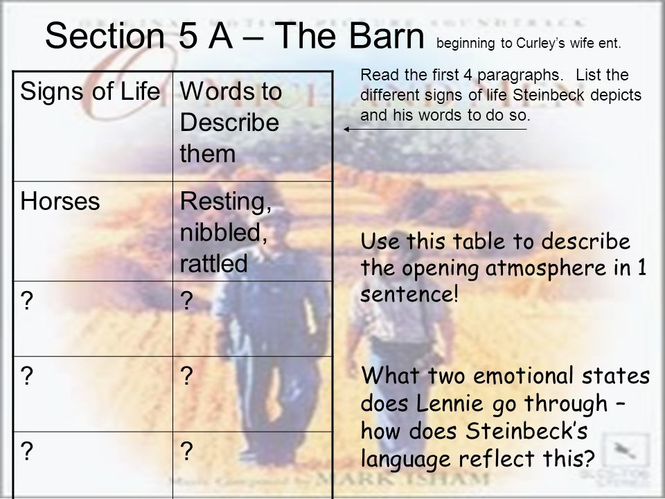 Section 5 A – The Barn beginning to Curley's wife ent.