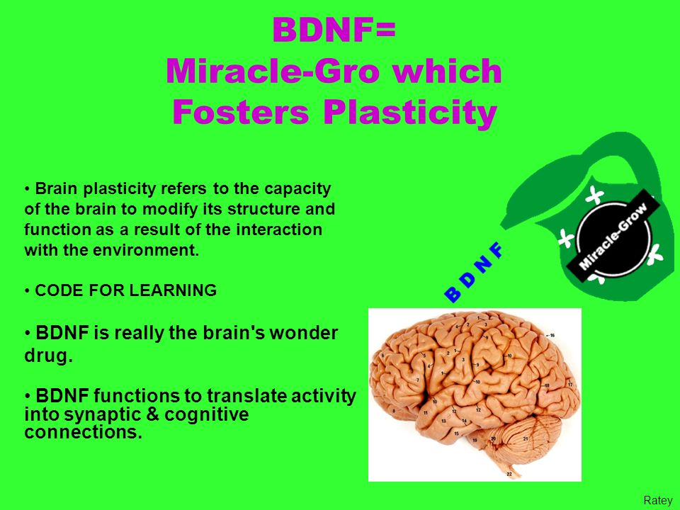 BDNF= Miracle-Gro which Fosters Plasticity