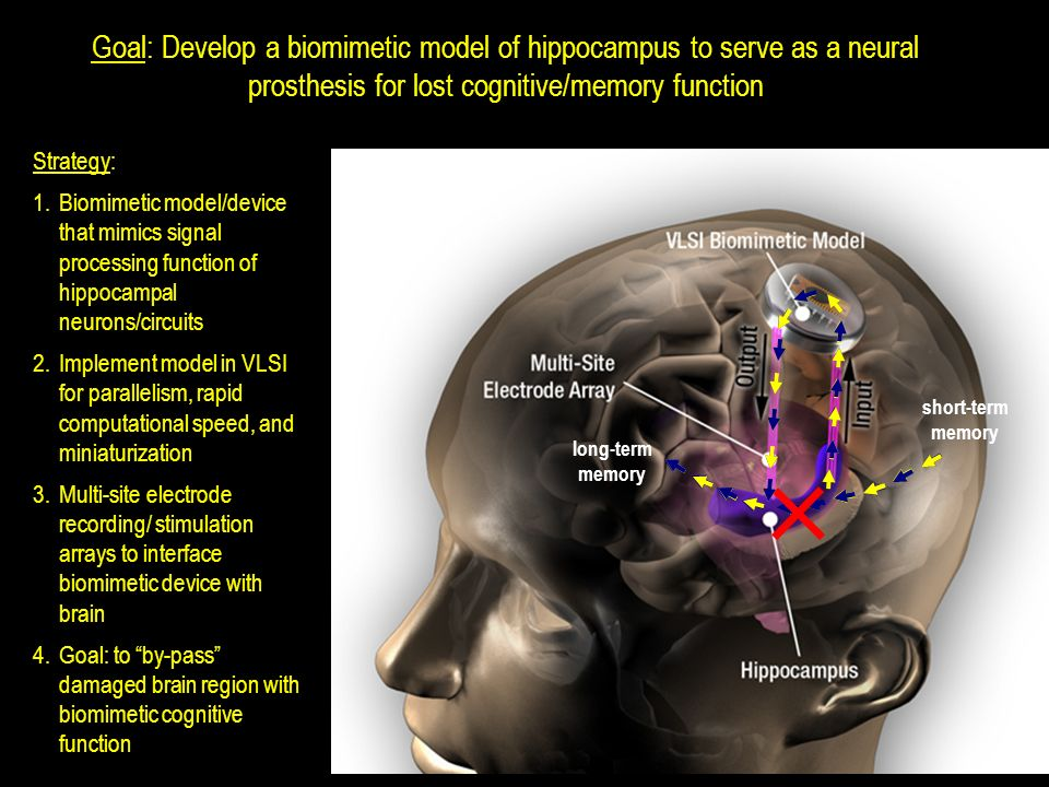 Goal: Develop a biomimetic model of hippocampus to serve as a neural prosthesis for lost cognitive/memory function