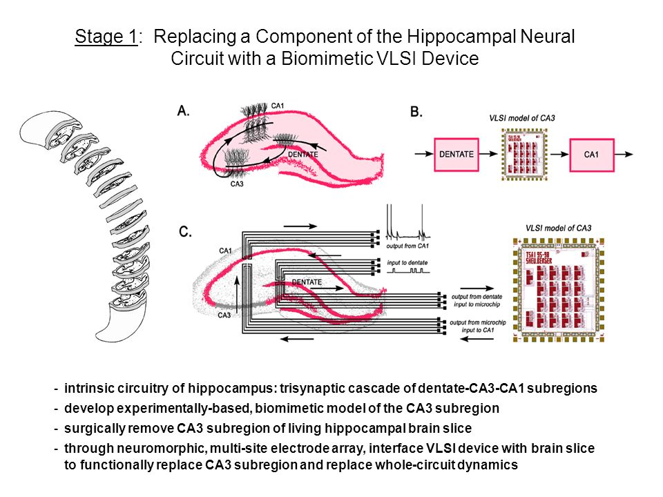 Stage 1: Replacing a Component of the Hippocampal Neural Circuit with a Biomimetic VLSI Device