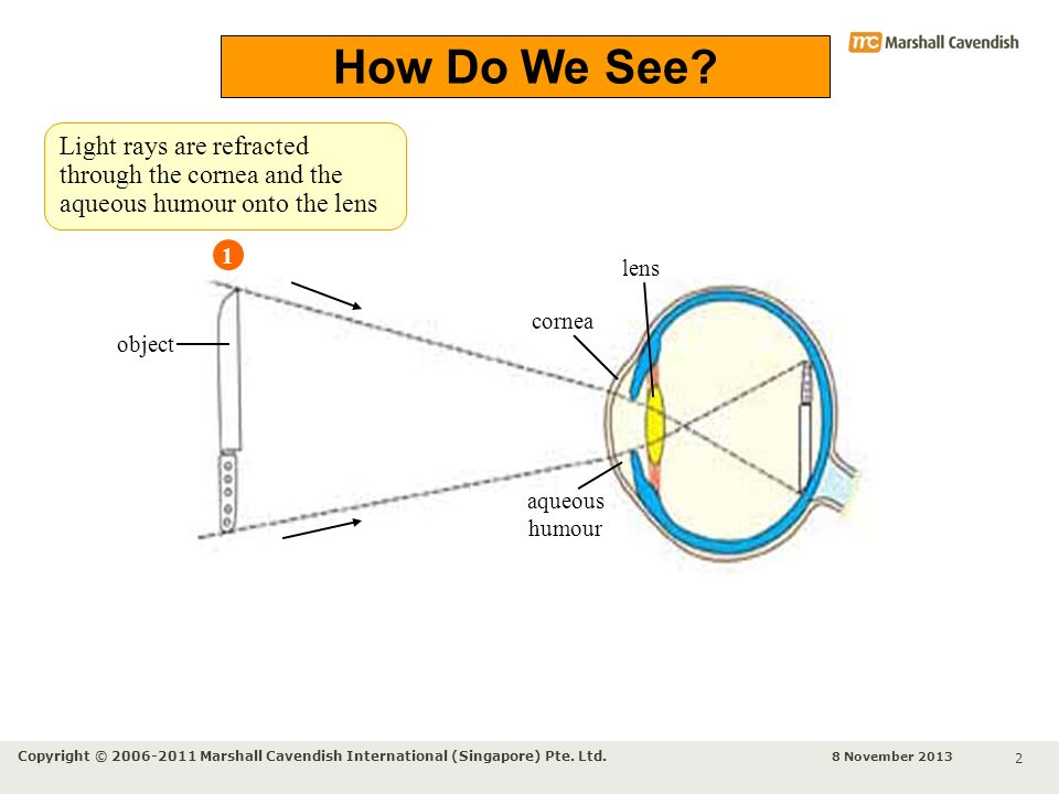 How Do We See Light rays are refracted through the cornea and the aqueous humour onto the lens. 1.