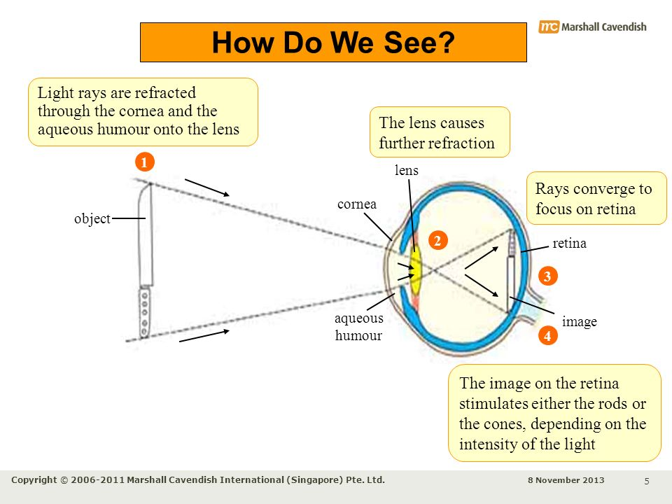 How Do We See Light rays are refracted through the cornea and the aqueous humour onto the lens. The lens causes further refraction.