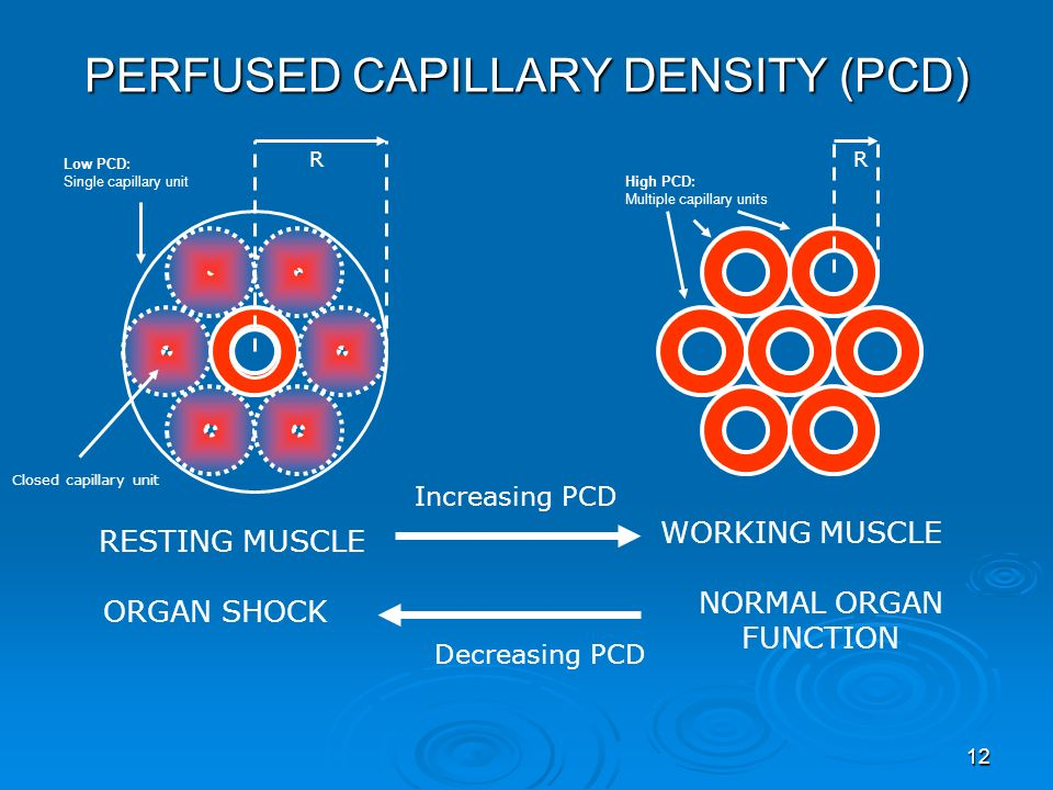 PERFUSED CAPILLARY DENSITY (PCD)