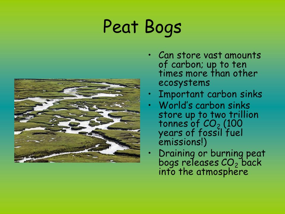 Peat Bogs Can store vast amounts of carbon; up to ten times more than other ecosystems. Important carbon sinks.