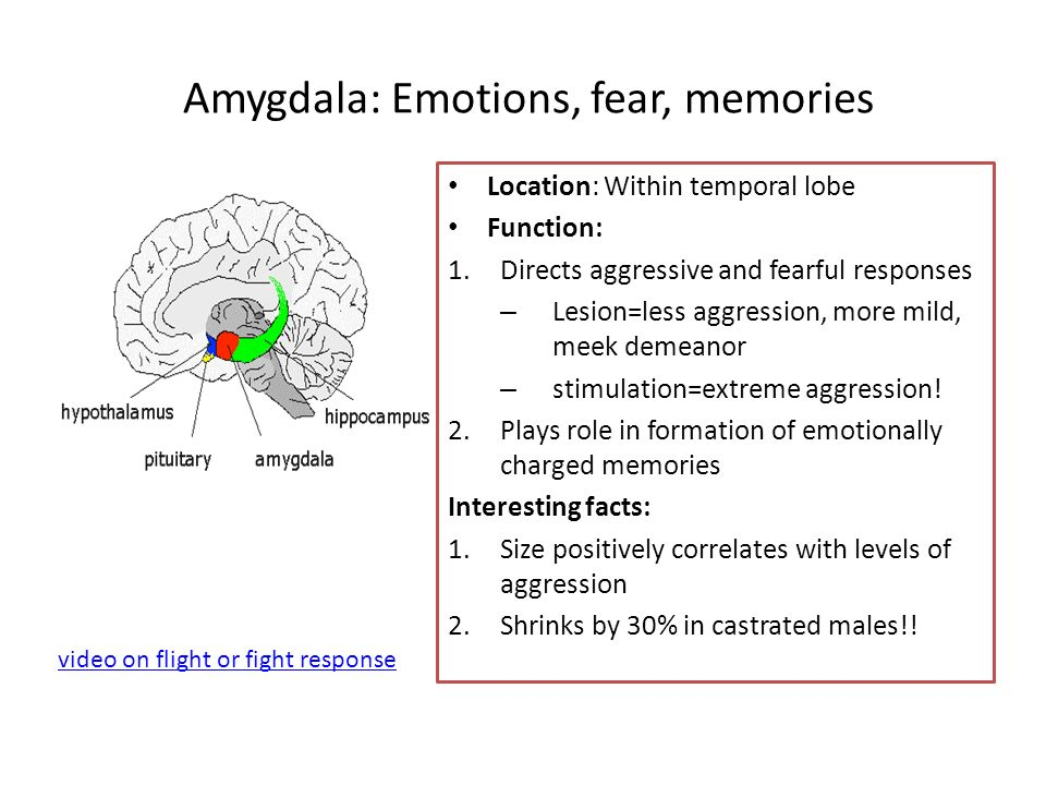 Amygdala: Emotions, fear, memories