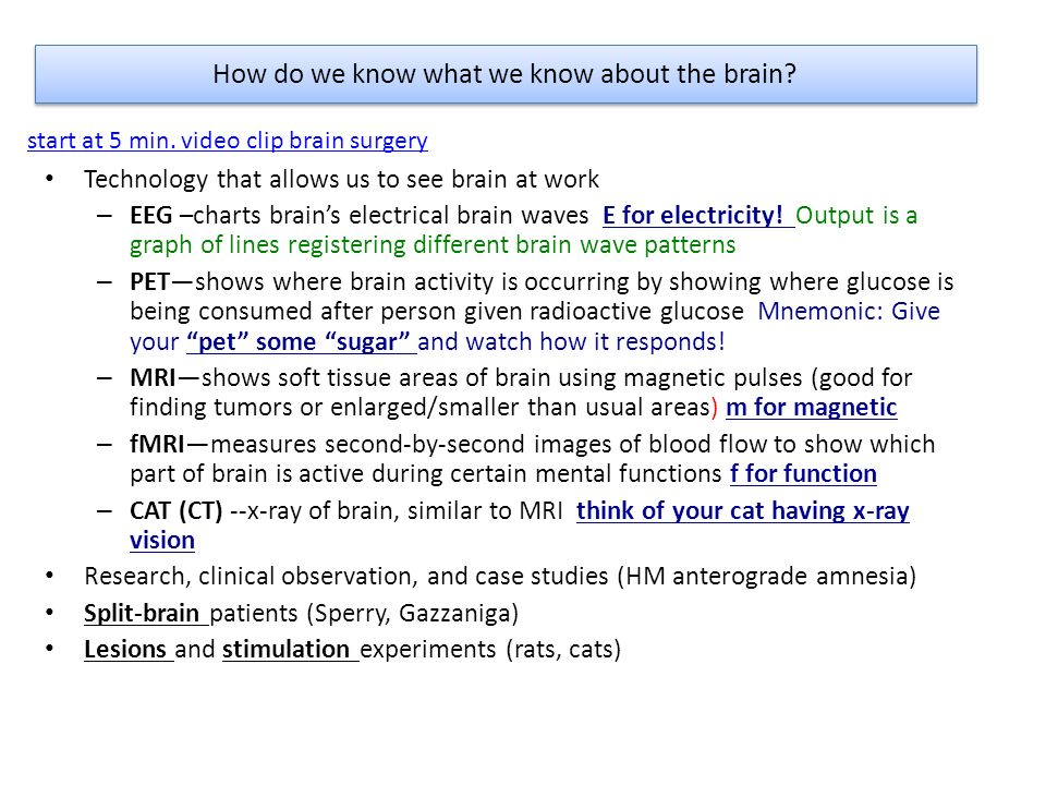 How do we know what we know about the brain