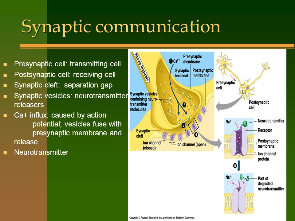 Synaptic communication