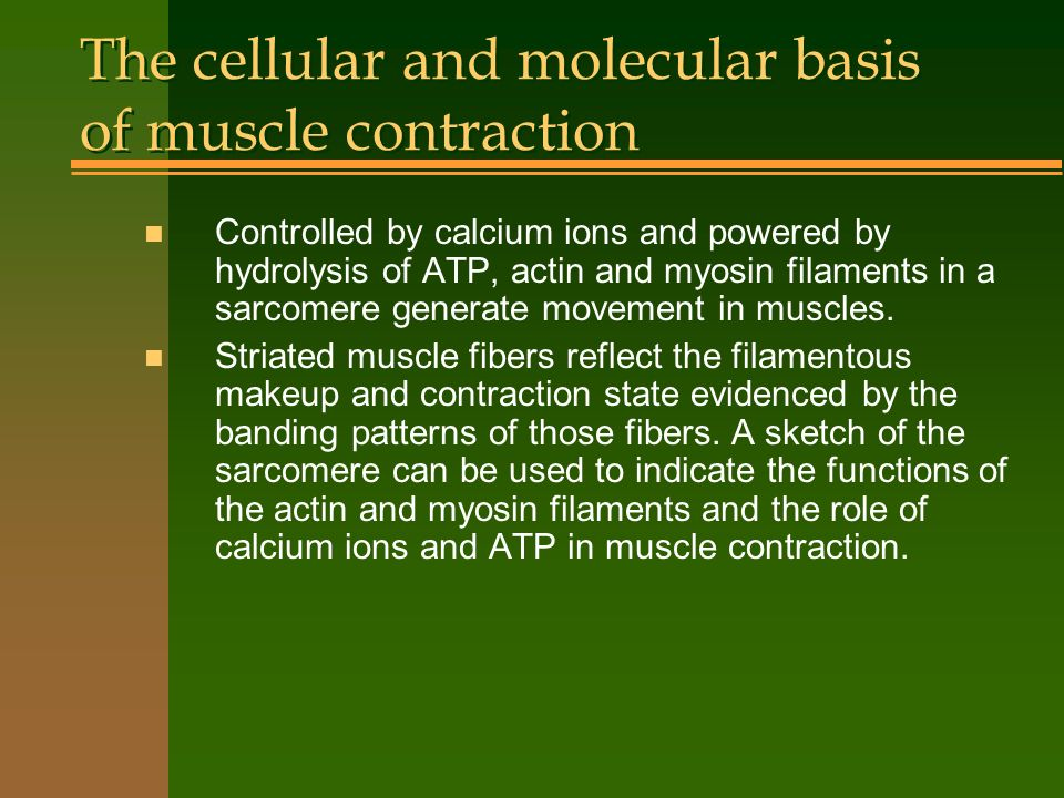 The cellular and molecular basis of muscle contraction