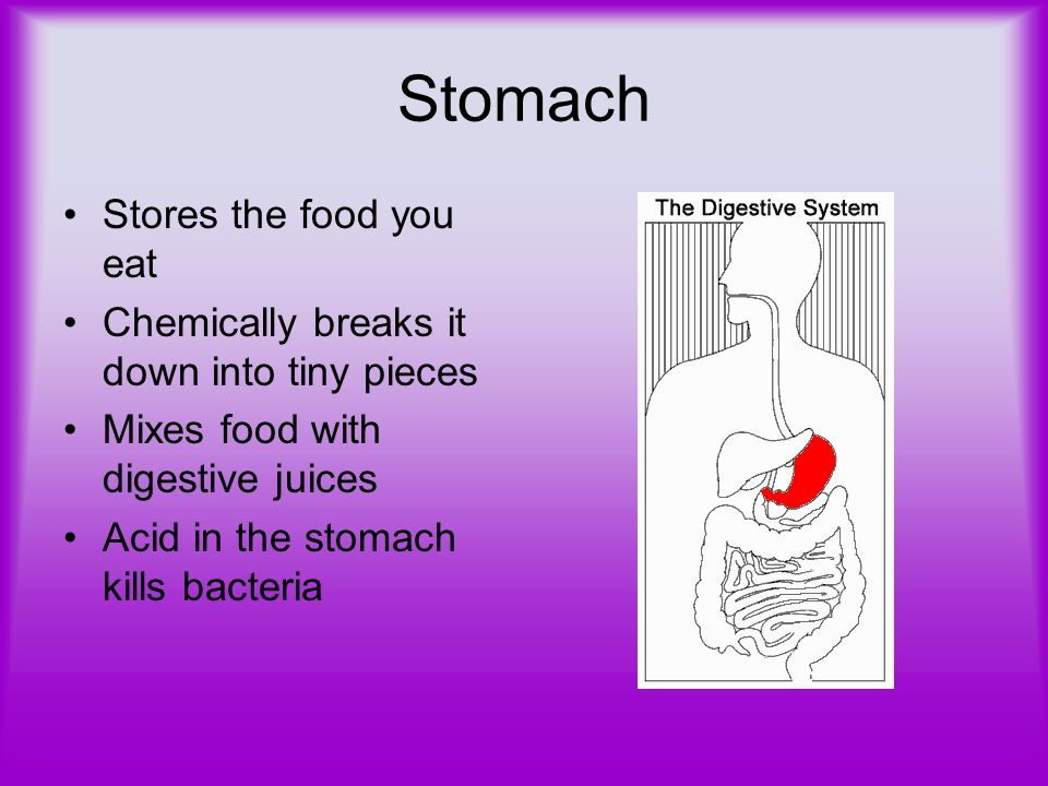 Stomach Stores the food you eat