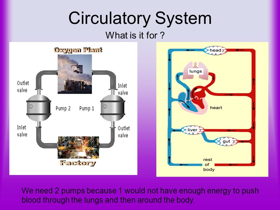 Circulatory System What is it for