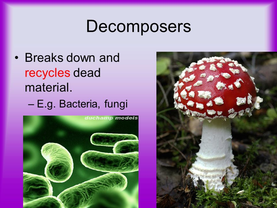 Decomposers Breaks down and recycles dead material.