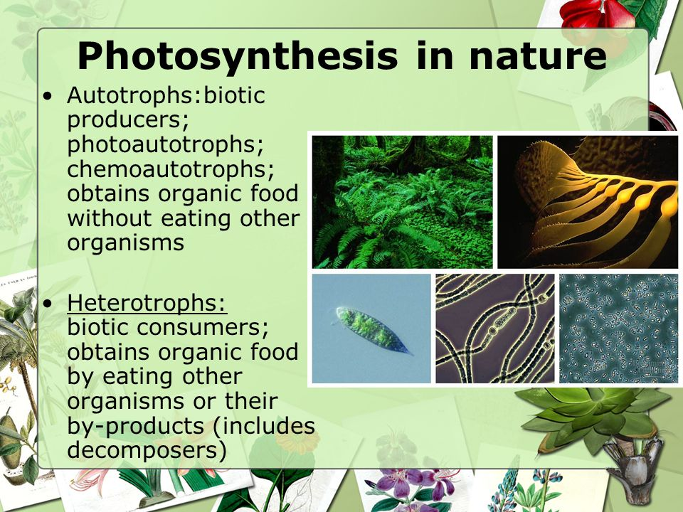 Photosynthesis in nature