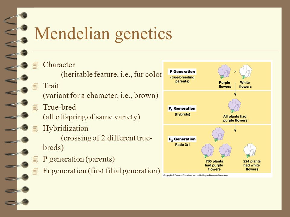 Mendelian genetics Character (heritable feature, i.e., fur color)