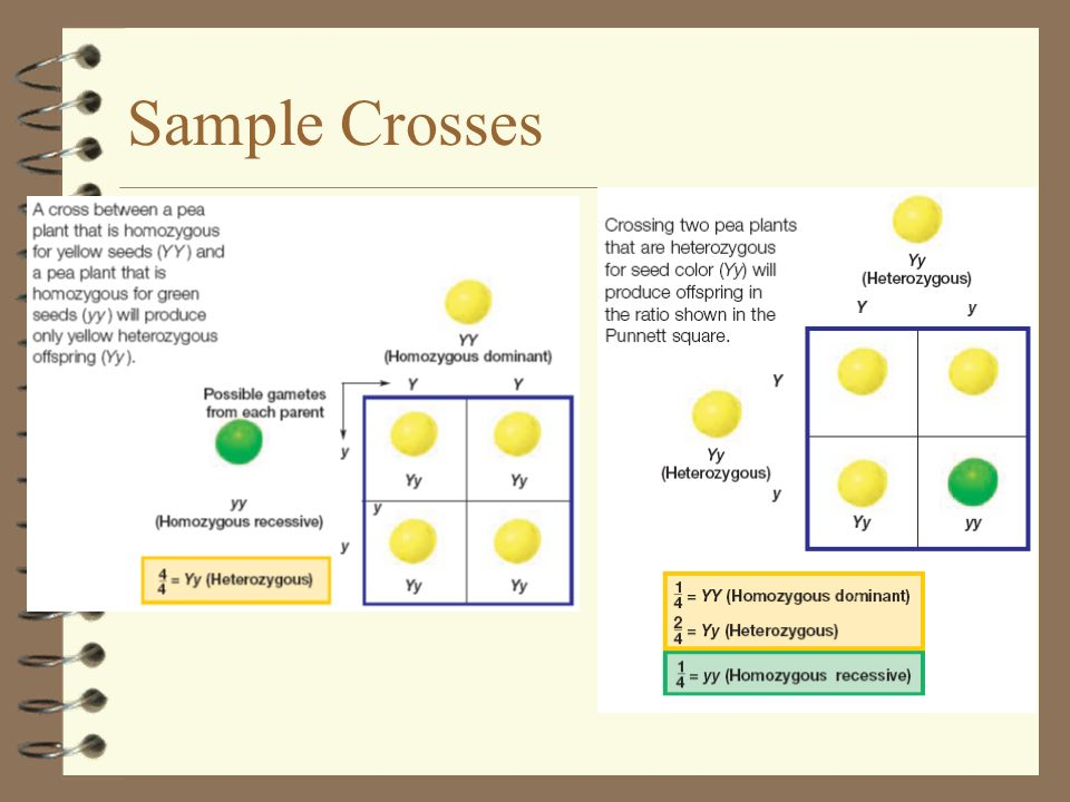 Sample Crosses