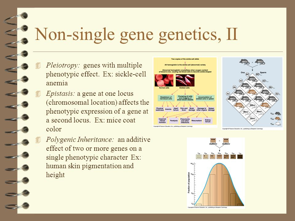 Non-single gene genetics, II