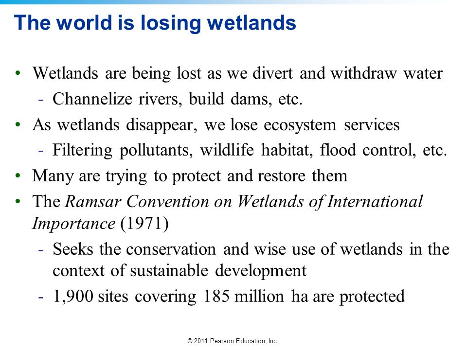 The world is losing wetlands