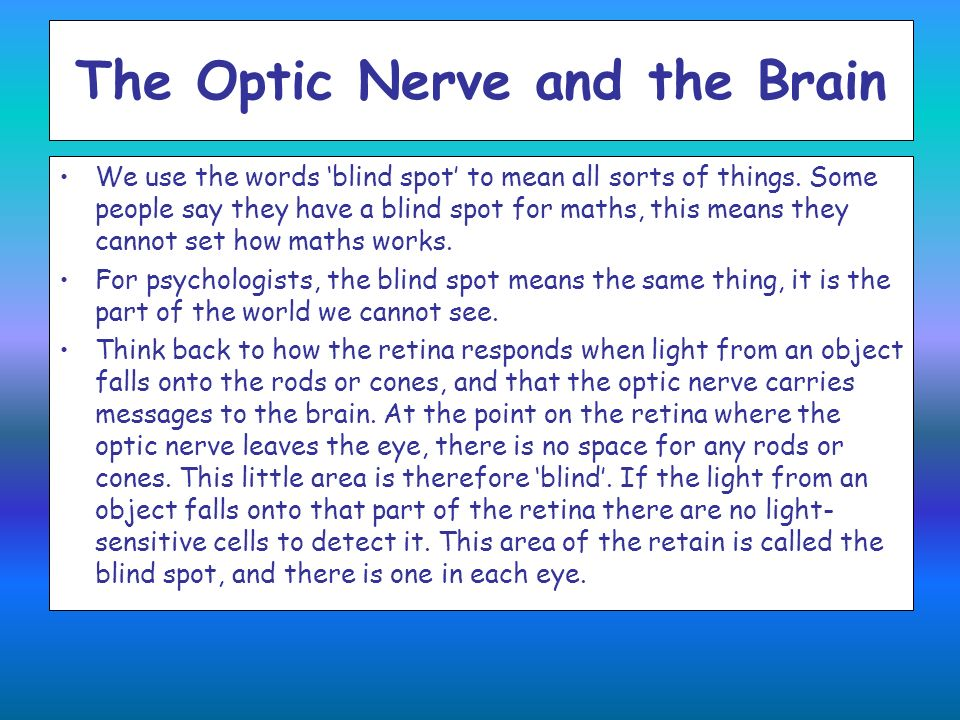 The Optic Nerve and the Brain