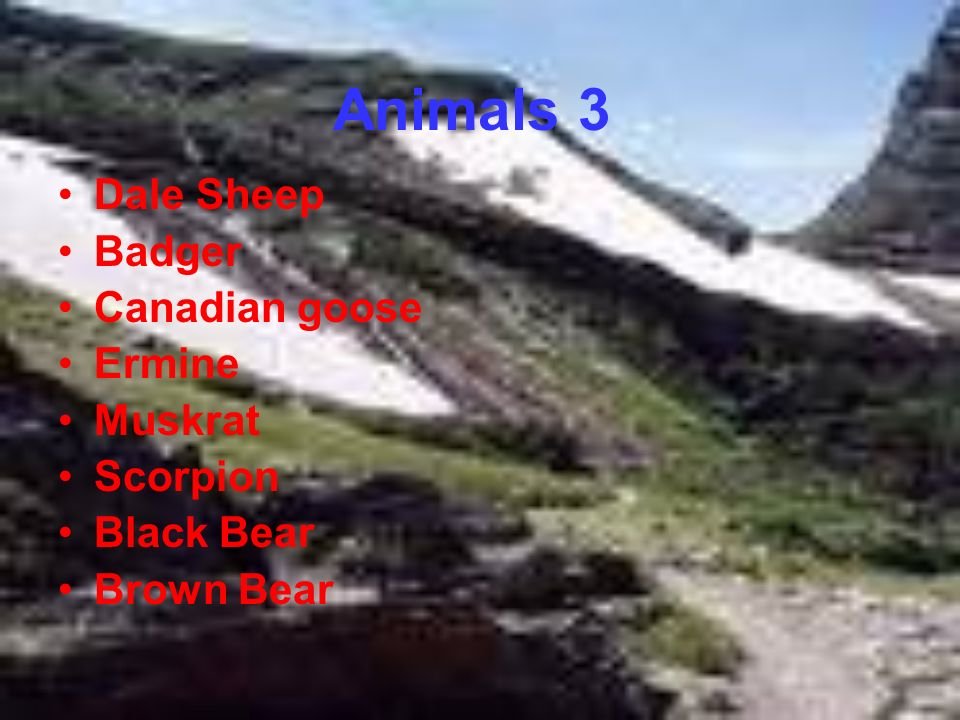 Animals 3 Dale Sheep Badger Canadian goose Ermine Muskrat Scorpion