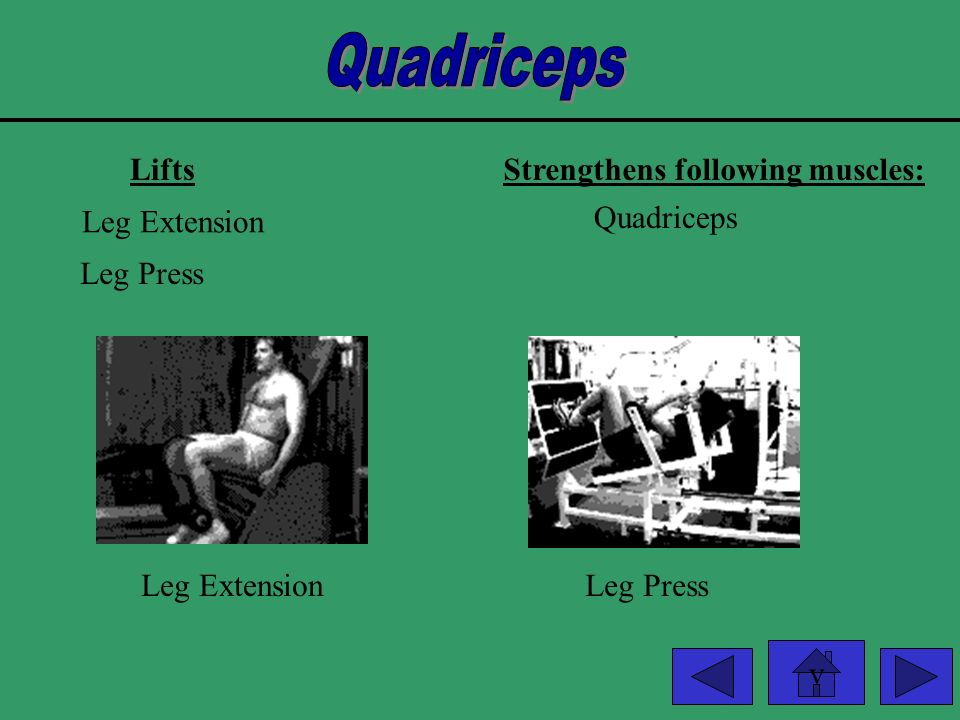 Quadriceps Lifts Strengthens following muscles: Leg Extension