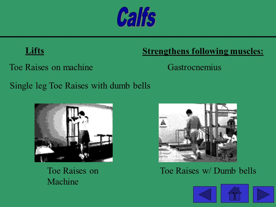 Calfs Lifts Strengthens following muscles: Toe Raises on machine