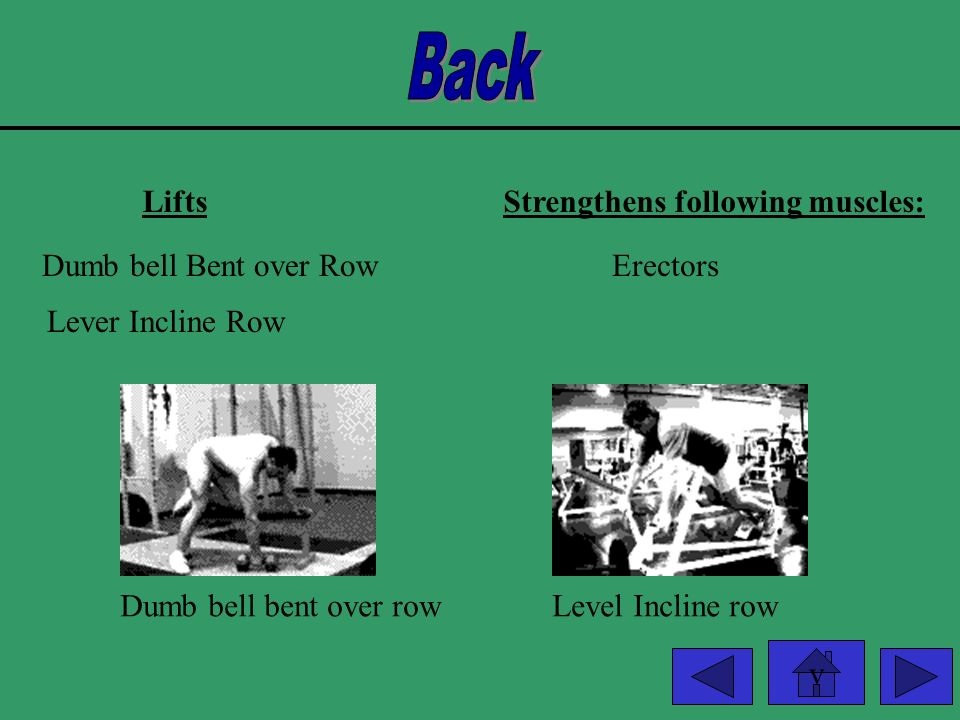 Back Lifts Strengthens following muscles: Dumb bell Bent over Row