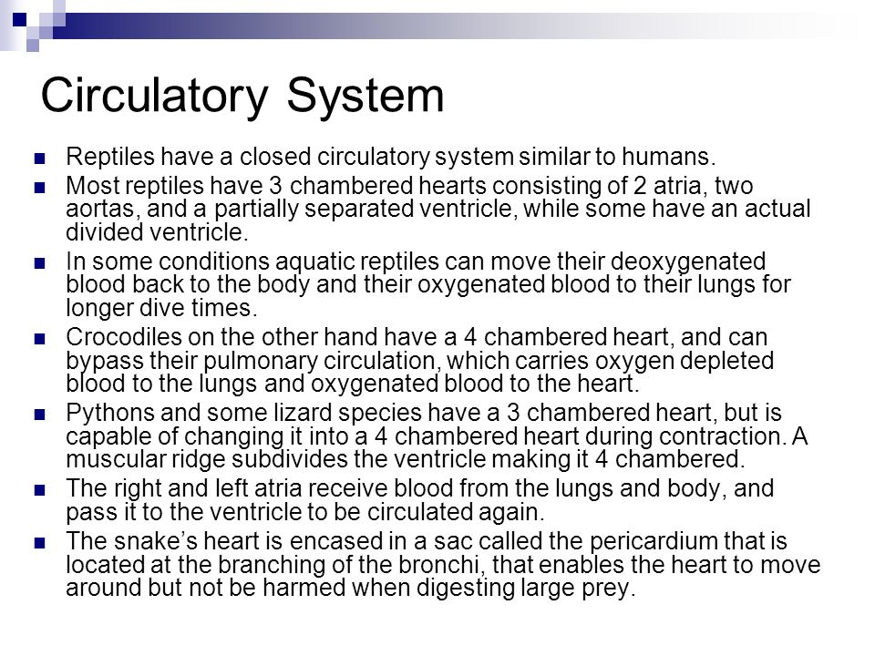 Circulatory System Reptiles have a closed circulatory system similar to humans.
