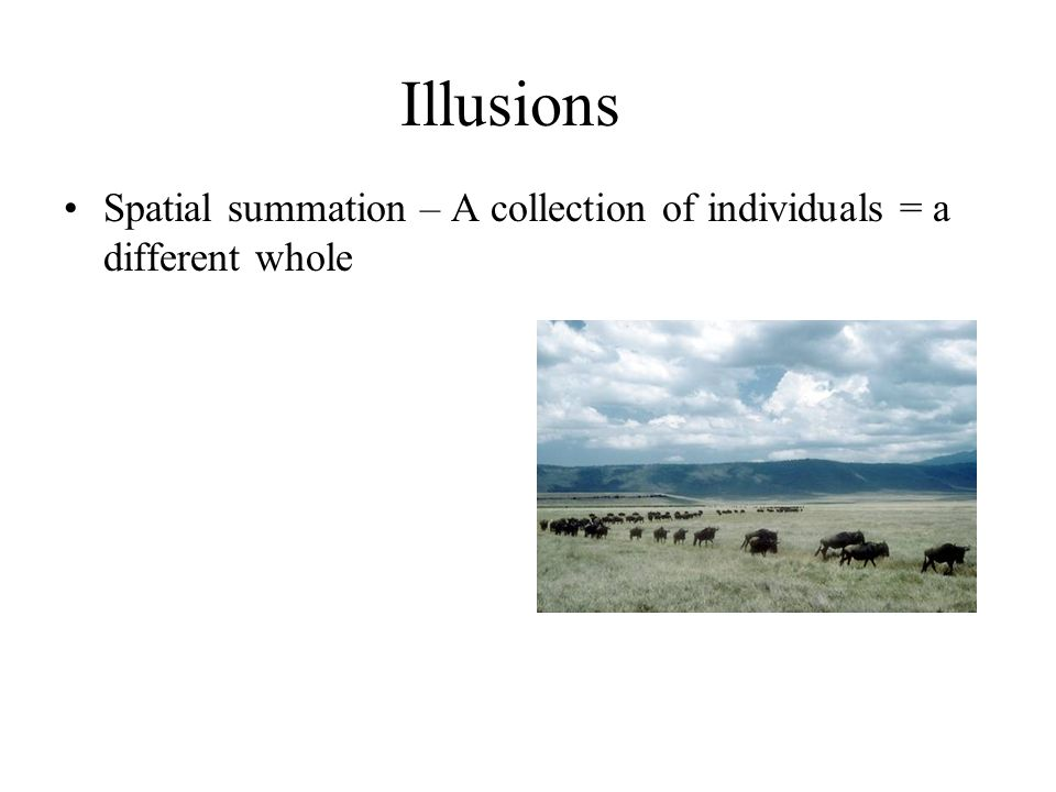 Illusions Spatial summation – A collection of individuals = a different whole