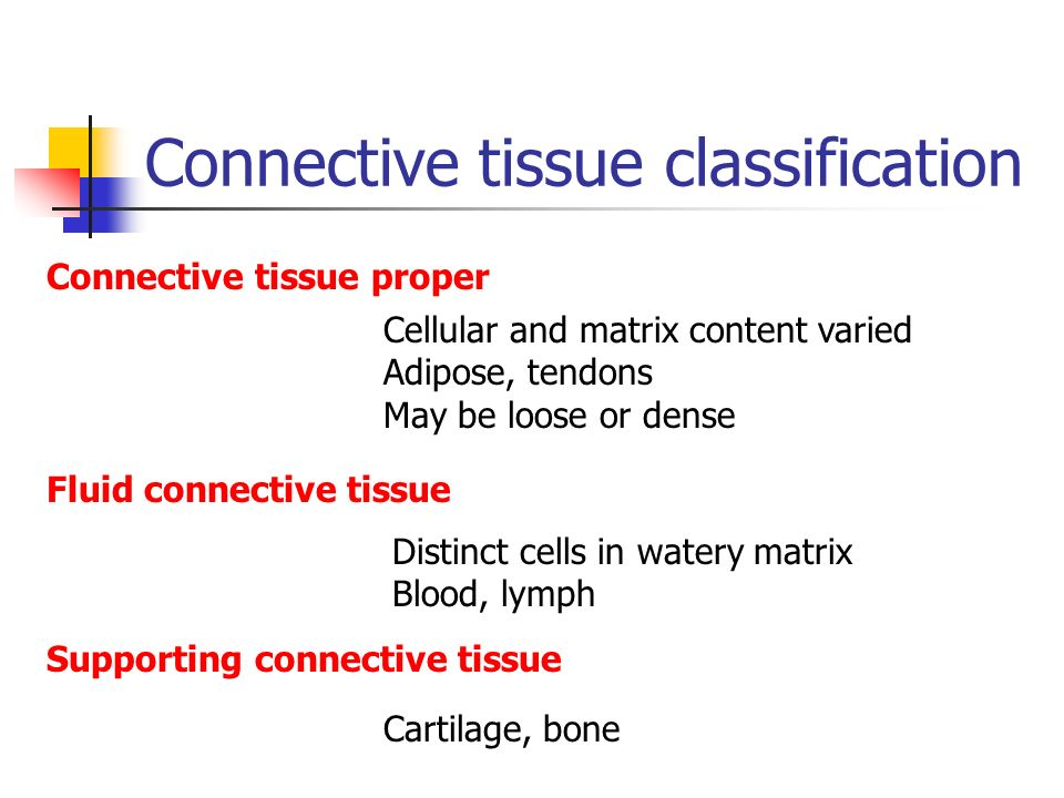 Connective tissue classification