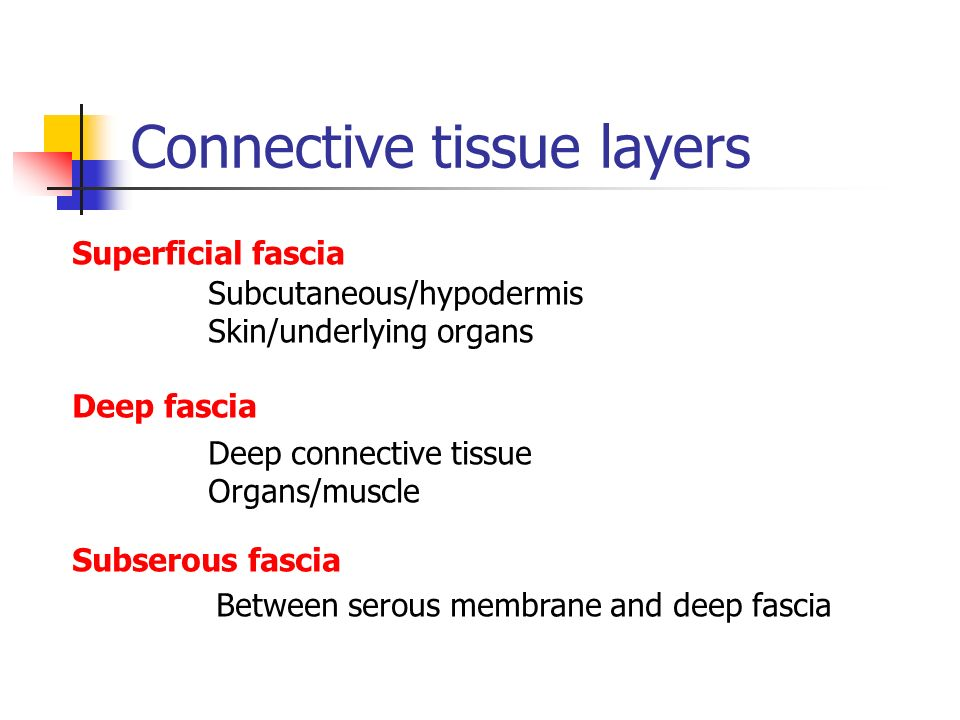 Connective tissue layers
