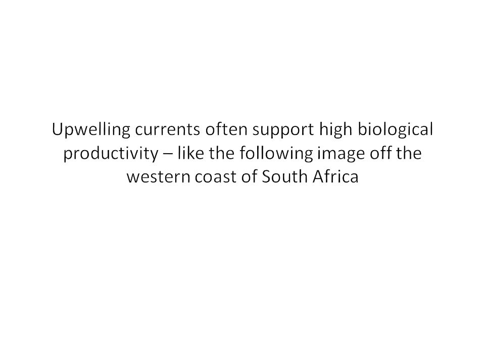 Upwelling currents often support high biological productivity – like the following image off the western coast of South Africa