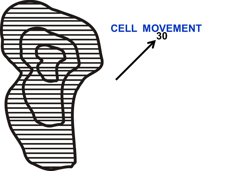 CELL MOVEMENT 30 Area/Line Movement