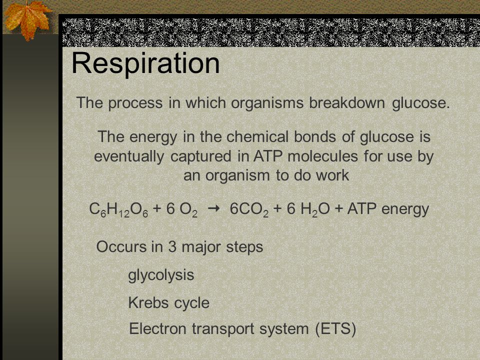 Respiration The process in which organisms breakdown glucose.
