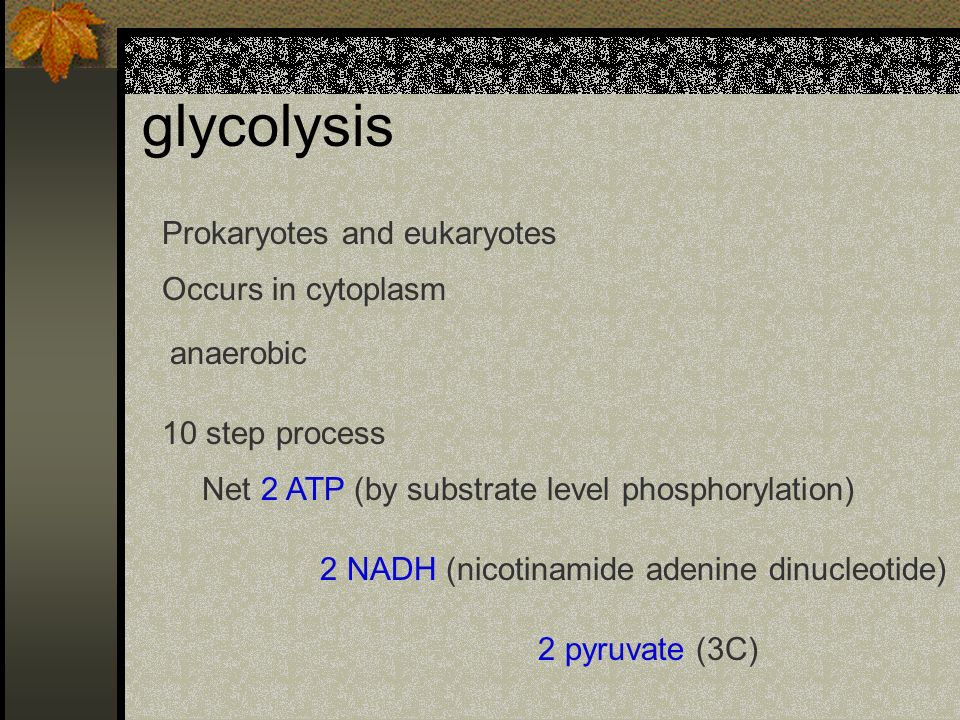 glycolysis Prokaryotes and eukaryotes Occurs in cytoplasm anaerobic