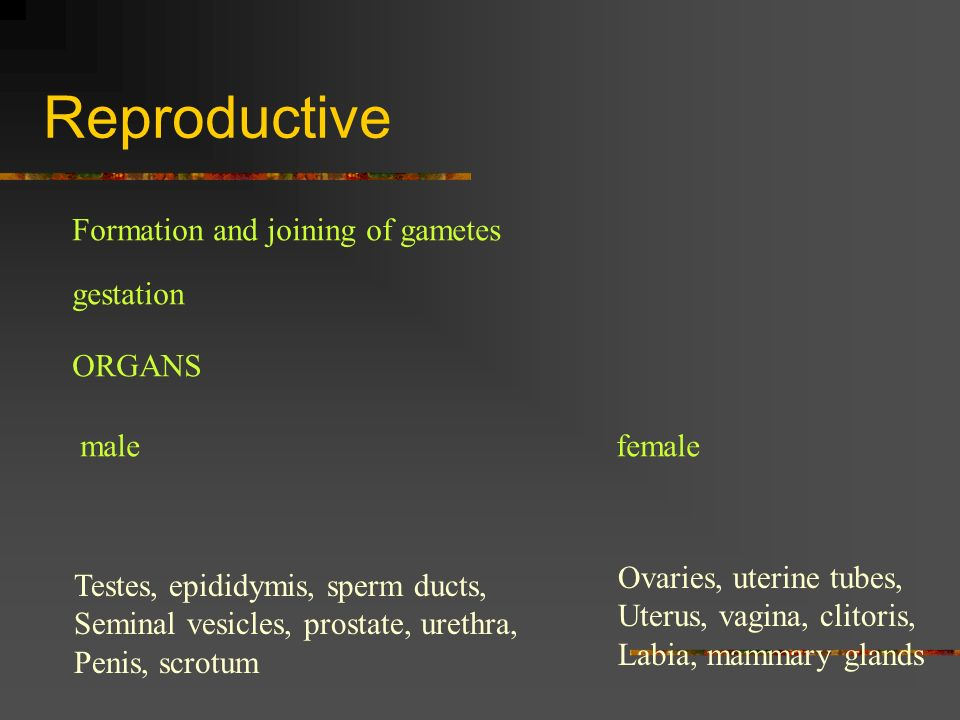 Reproductive Formation and joining of gametes gestation ORGANS male
