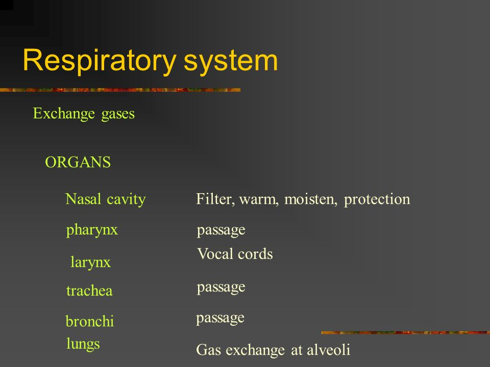 Respiratory system Exchange gases ORGANS Nasal cavity