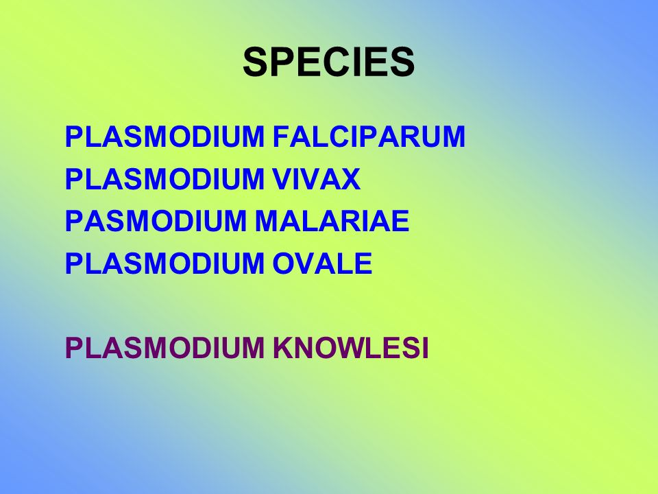 SPECIES PLASMODIUM FALCIPARUM PLASMODIUM VIVAX PASMODIUM MALARIAE