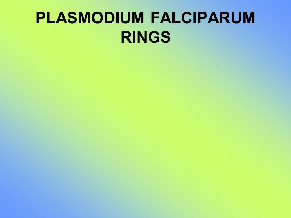 PLASMODIUM FALCIPARUM RINGS