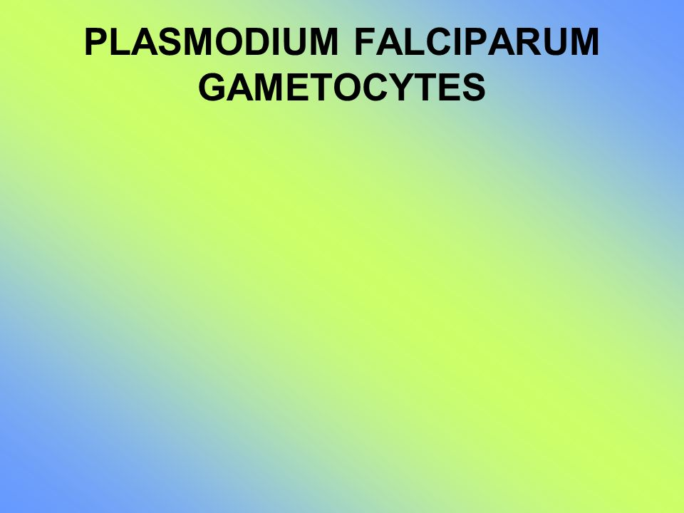 PLASMODIUM FALCIPARUM GAMETOCYTES